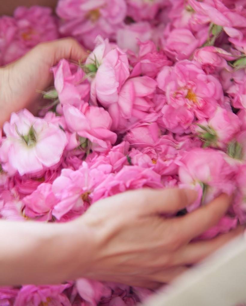 éterický olej růže 1
