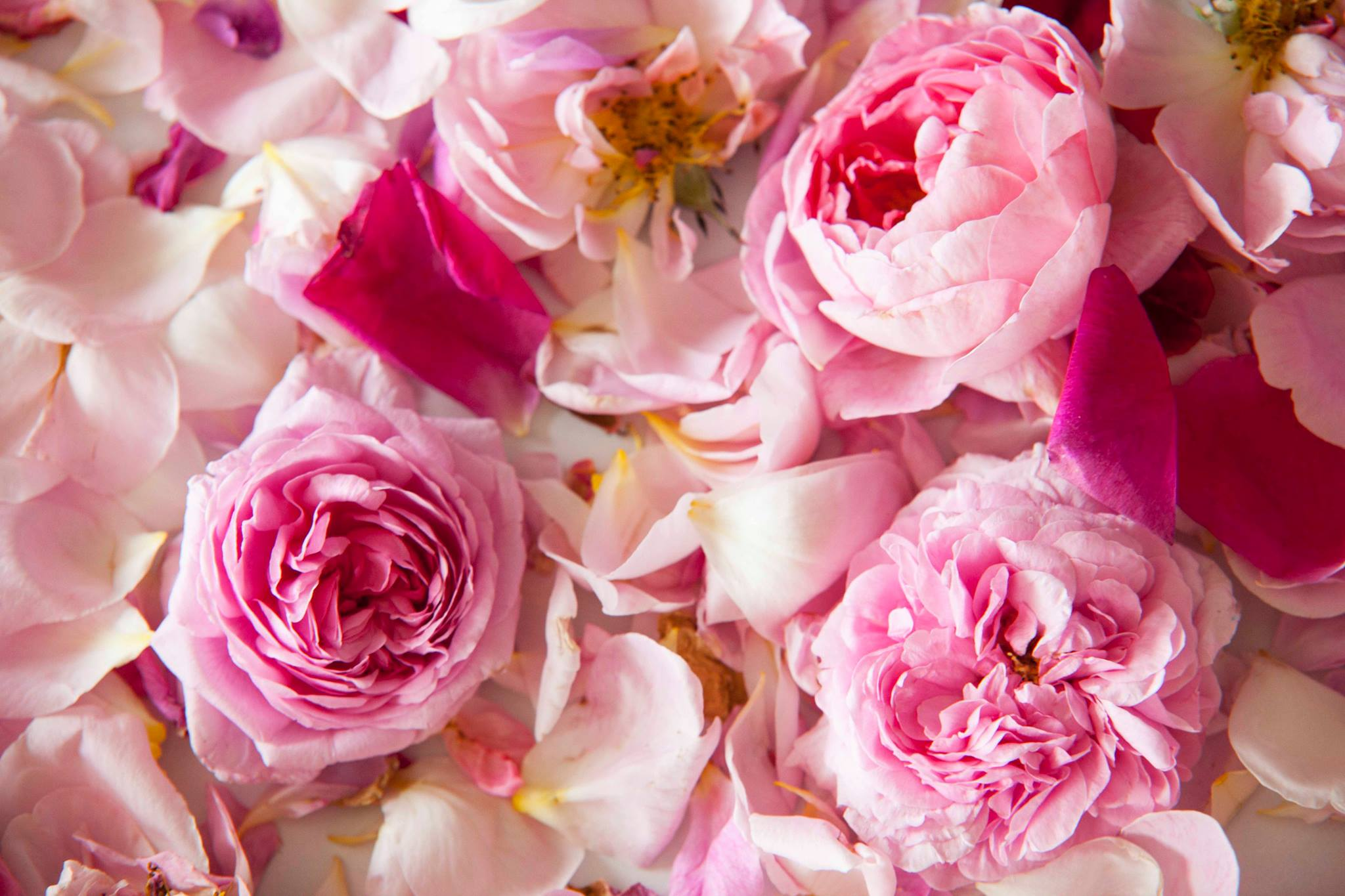 éterický olej růže